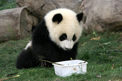 Panda Fotos de Stock