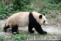 Panda Images stock