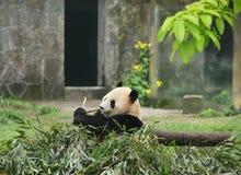 Panda Imagen de archivo