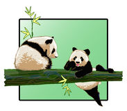 Panda Στοκ Φωτογραφία