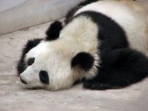 Panda Foto de Stock