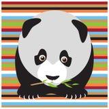 Panda Stock Foto