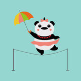 Panda acrobat. With colored umbrella Stock Photography