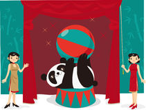 Panda acrobatic show Stock Photography