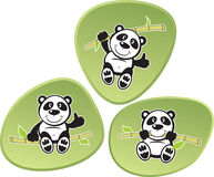 Panda Acrobatics. Vector Panda with green bamboo background Royalty Free Stock Images