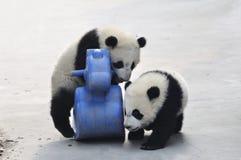 Panda Baby Photo libre de droits