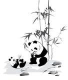 Panda and baby eat a bamboo Royalty Free Stock Photo