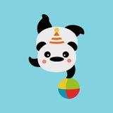 Panda on the ball. Circus Panda acrobat on a ball Royalty Free Stock Photo