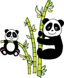 Panda with bamboo. Two pandas with bamboo.  image Stock Images