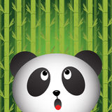 Panda with bamboo background Stock Image