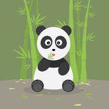 Panda In The Bamboo Forest Stock Photos