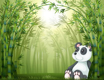 A panda in the bamboo forest Royalty Free Stock Images