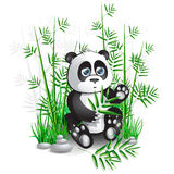 Panda bamboo Stock Image