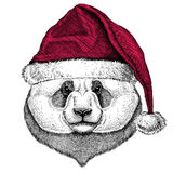 Panda bear, bamboo bear Christmas illustration Wild animal wearing christmas santa claus hat Red winter hat Holiday Royalty Free Stock Image