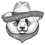 Panda bear, bamboo bear Wild animal wearing sombrero Mexico Fiesta Mexican party illustration Wild west. Wild animal wearing sombrero Mexico Fiesta Mexican party Stock Images