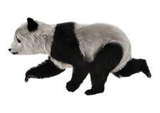 Panda Bear Cub Fotografia Stock