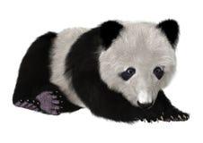 Panda Bear Cub Immagini Stock Libere da Diritti