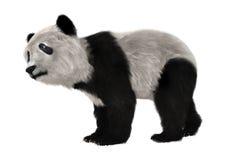 Panda Bear Cub Fotografia Stock Libera da Diritti