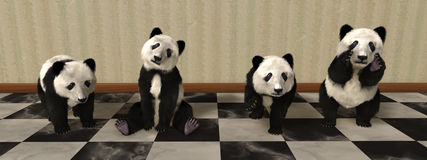 Panda Bear Cub Panorama Illustraion Royalty Free Stock Image