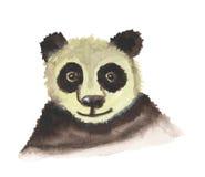 Panda Bear divertente Fotografie Stock