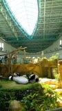 Panda bear santuary, Kuala Lumpur Zoo, Malaysia Stock Image