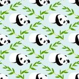 Panda bear vector background. Royalty Free Stock Images