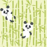 Panda bears Stock Photos