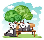 Panda bears at the park Royalty Free Stock Images