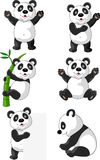 Panda carton set Stock Photos