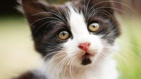 Panda Cat Imagenes de archivo