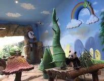 Panda che gode del bambù fotografie stock libere da diritti