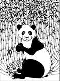 Panda che mangia bambù illustrazione di stock