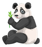 Panda chewing green leaves Stock Image