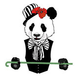 Panda in circus Stock Image