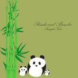 Panda con fondo di bambù Immagine Stock