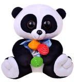 Panda con il crepitio Fotografia Stock