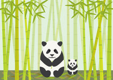 Panda And Cub Eating Bamboo. An endangered mother panda and cub sitting eating leaves in a bamboo forest, illustration Royalty Free Stock Photos