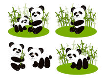 Panda cute set Royalty Free Stock Photography