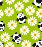 Panda and daisy. Royalty Free Stock Photo