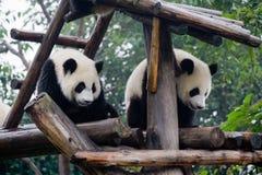 panda de porcelaine photo stock