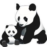 Panda del cucciolo e della madre Fotografia Stock