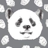 Panda del fronte su un fondo grigio Fotografia Stock Libera da Diritti