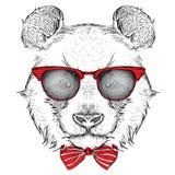 Panda del retrato de la imagen en el pañuelo y con los vidrios Tienda extrema del deporte Fotos de archivo libres de regalías