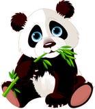 Panda, der Bambus isst vektor abbildung