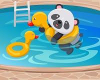 Panda die met eendbuis zwemt Stock Foto