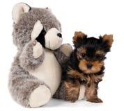 Panda do filhote de cachorro e do brinquedo Foto de Stock
