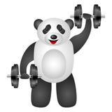 Panda dumbbel Royalty Free Stock Photos