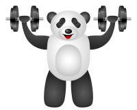 Panda dumbbel Stock Photography