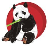 Panda eat and red banner. Panda sit and eat near of red round icon Royalty Free Stock Photo