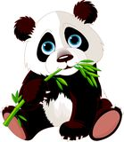 Panda eating bamboo Royalty Free Stock Image